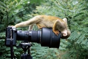 MonkeyLookCameraLens_09